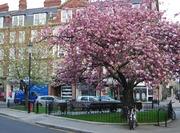 Chelsea Green London