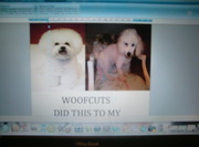 Woofcuts Liverpool