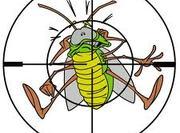 Pest Control Chelsea London