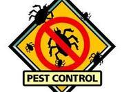Pest Control Croydon London
