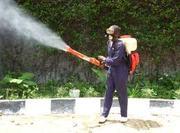 Pest Control Watford London