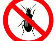 Pest Control Saint Albans London