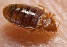 Pest Control Sunbury Surrey