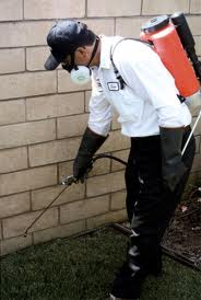 Pest Control Southwark London