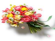 Mr Florist Chiswick London
